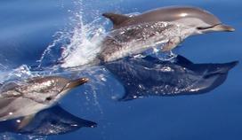 Espace Mer - A la rencontre des dauphins...