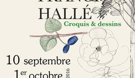 Exposition Francis Hallé