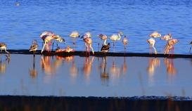 Observer les oiseaux au Salin des Pesquiers
