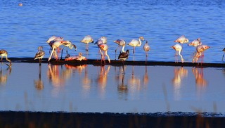 Observer les oiseaux au Salin des Pesquiers - Hyères
