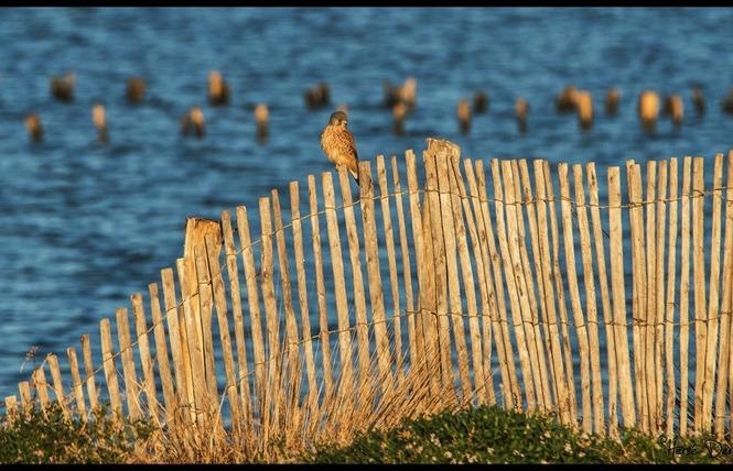 Observer les oiseaux au Salin des Pesquiers 22 - Hyères
