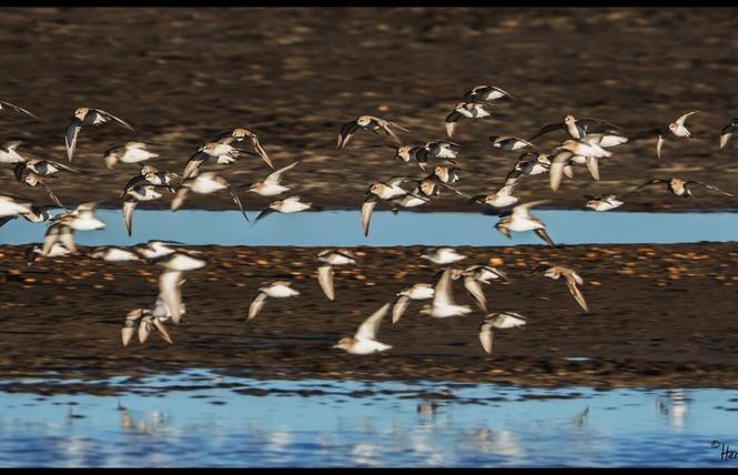 Observer les oiseaux au Salin des Pesquiers 23 - Hyères