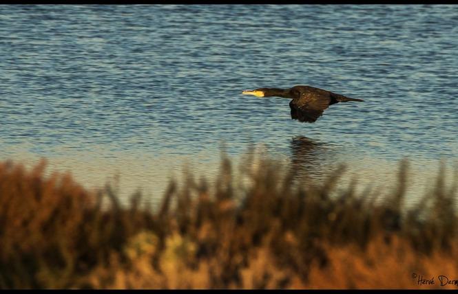 Observer les oiseaux au Salin des Pesquiers 9 - Hyères