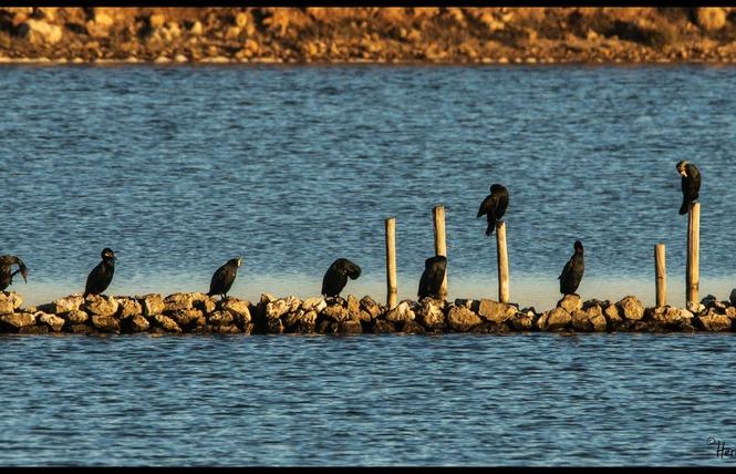 Observer les oiseaux au Salin des Pesquiers 21 - Hyères