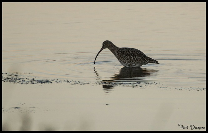 Observer les oiseaux au Salin des Pesquiers 4 - Hyères
