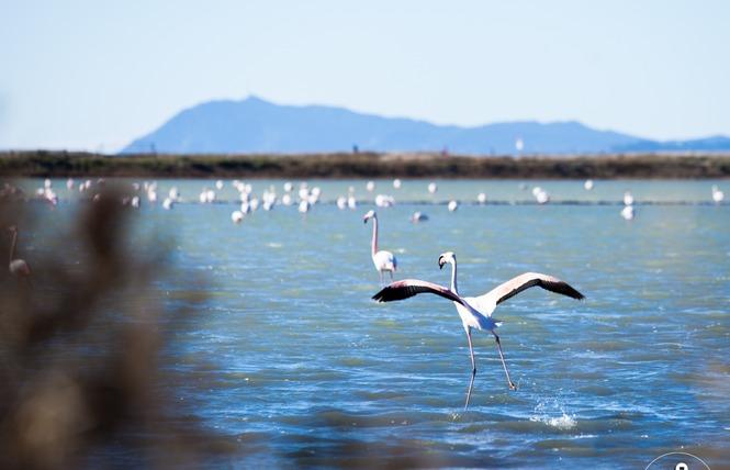 Observer les oiseaux au Salin des Pesquiers 20 - Hyères