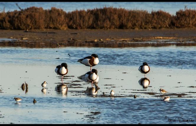 Observer les oiseaux au Salin des Pesquiers 6 - Hyères
