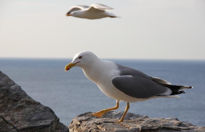 Observer les oiseaux au Salin des Pesquiers 15 - Hyères