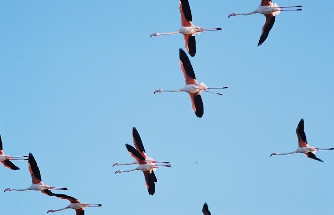 Observer les oiseaux au Salin des Pesquiers 12 - Hyères