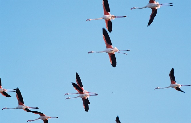 Observer les oiseaux aux Vieux Salins 7 - Hyères