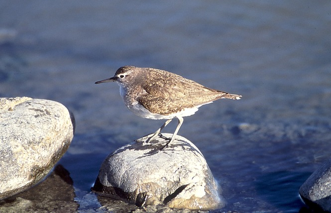 Observer les oiseaux au Salin des Pesquiers 14 - Hyères