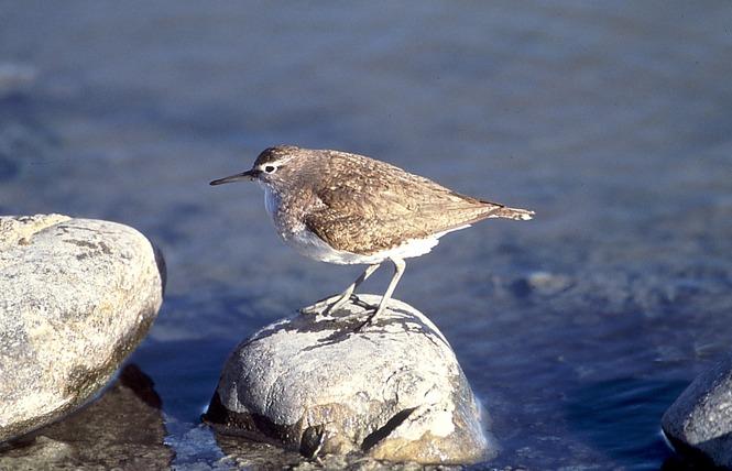 Observer les oiseaux aux Vieux Salins 8 - Hyères
