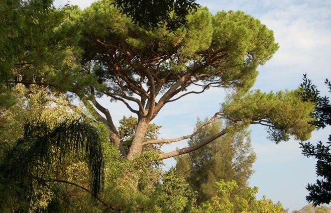 Le parc Olbius Riquier 19 - Hyères