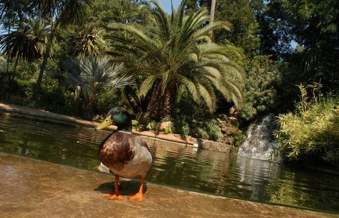 Le parc Olbius Riquier 4 - Hyères